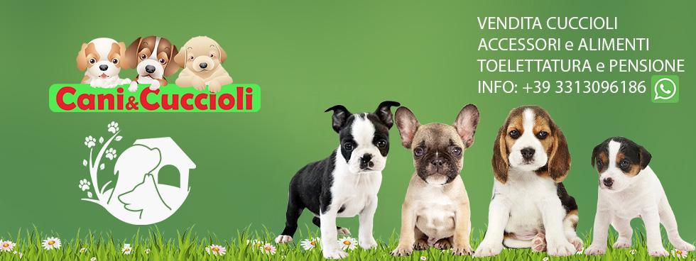 Cani E Cuccioli Rozzano Cani E Cuccioli è Nato Inizialmente Com