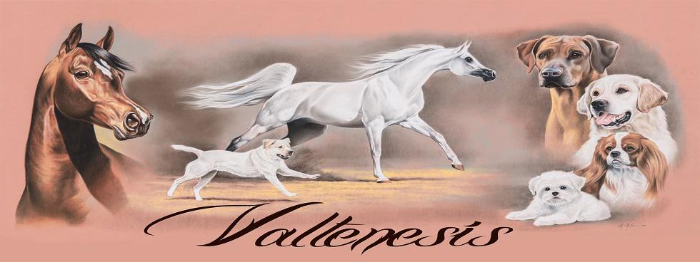 Valtenesi dogs and horses