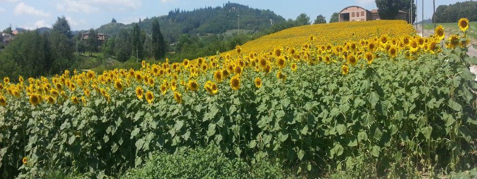 Agriturismo Le Ginestre - provincia di Bologna
