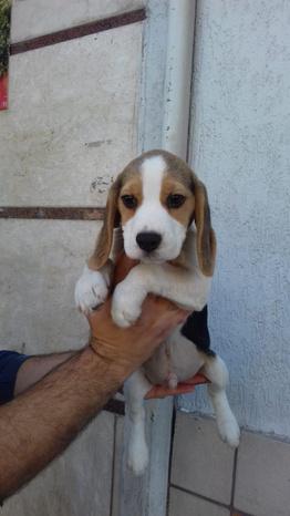 ZOOTECNICA DAVIDE - Qualiano - autorizzato a vendere cuccioli di tutte - Subito Impresa+