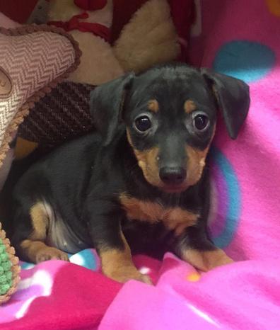 crazy dog s.n.c. - Corsico - ci occupiamo della vendita di cuccioli d - Subito Impresa+