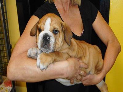 La casa del cucciolo Bergamo srls - Bergamo - Commercializziamo ed alleviamo cuccioli - Subito Impresa+