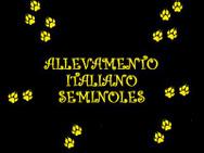 Allevamento italiano SEMINOLES logo