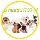 IL MAGNIFICO - CUCCIOLI DI PICCOLA TAGLIA logo