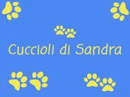 CUCCIOLI DI TUTTE LE RAZZE logo