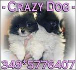 crazy dog s.n.c. logo